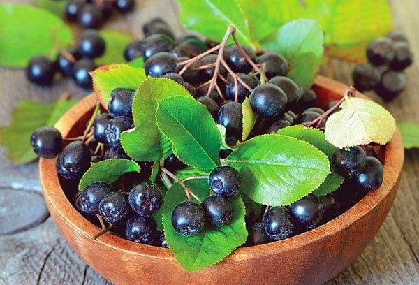 Грозди черноплодной рябины