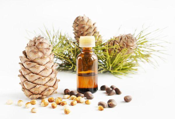 Кедровое масло – польза и вред, как принимать в лечебных целях
