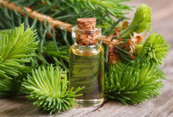 Кедровые ветки и масло в бутылке