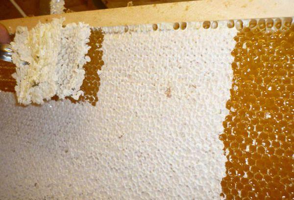 Забрусовый мед