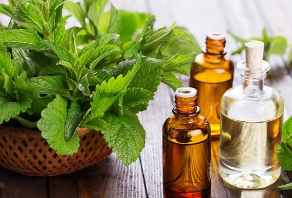 Листья мяты и эфирные масла