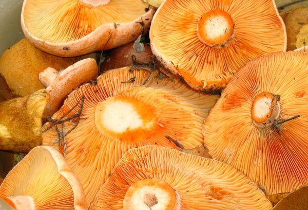 очищенные грибы рыжики