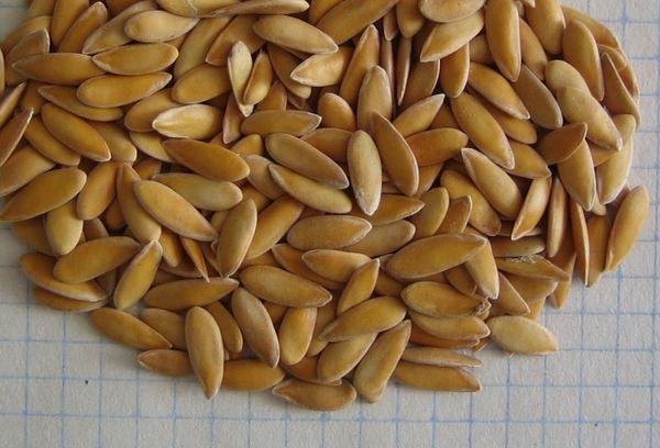 семена дыни на бумаге