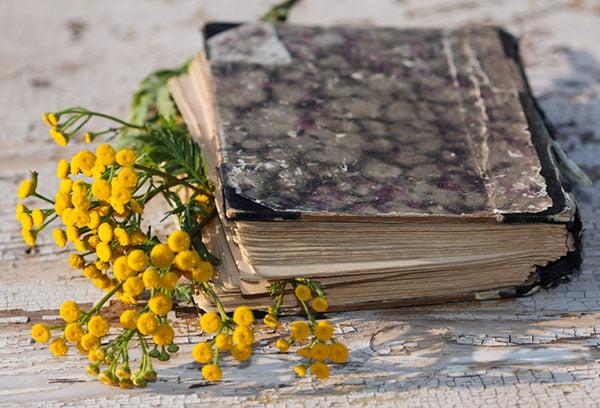 Пижма в старой книге