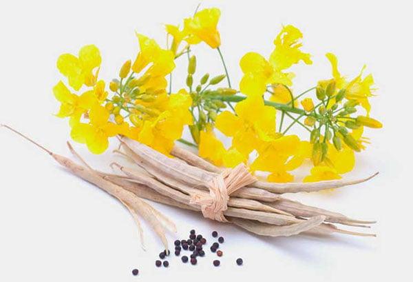 Цветки и семена рапса