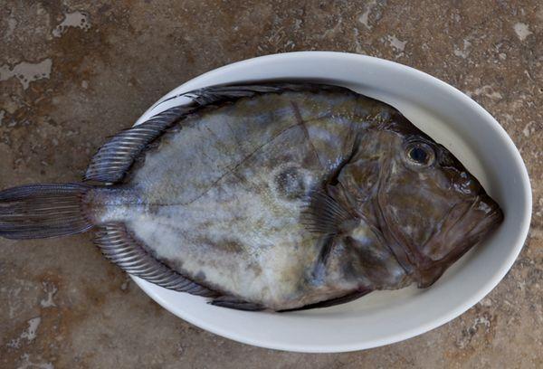 рыба джон дори