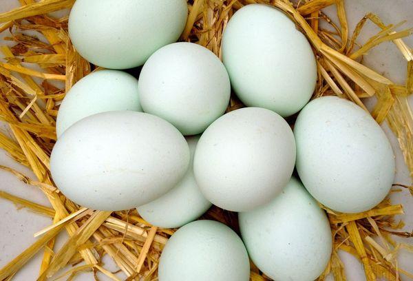 яйца утки
