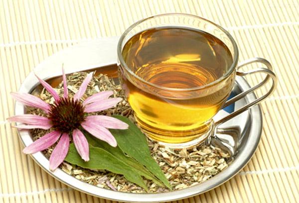 Чай из эхинацеи