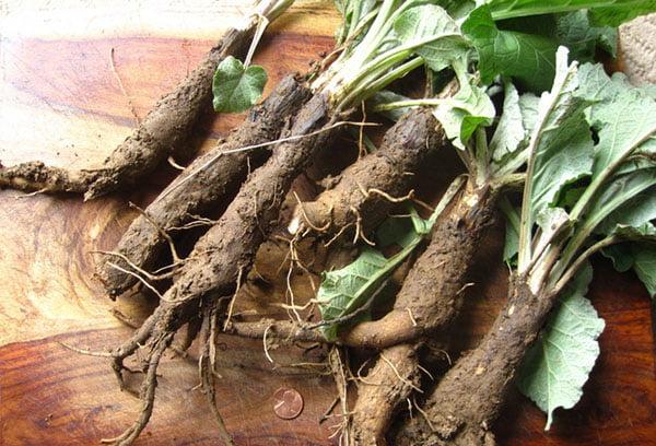 Заготовка корней лопуха
