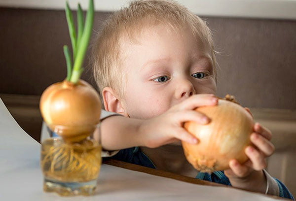 Ребенок держит репчатый лук