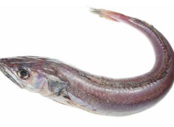 Рыба хоки