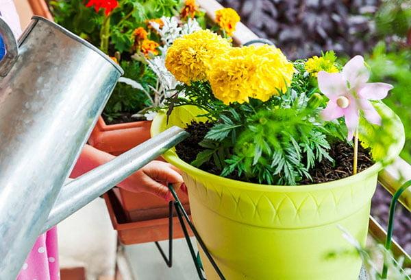 Полив растений в горшках