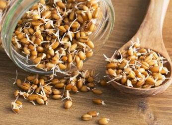 Пророщенная пшеница