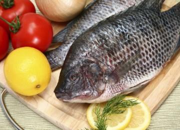 Рыба тилапия