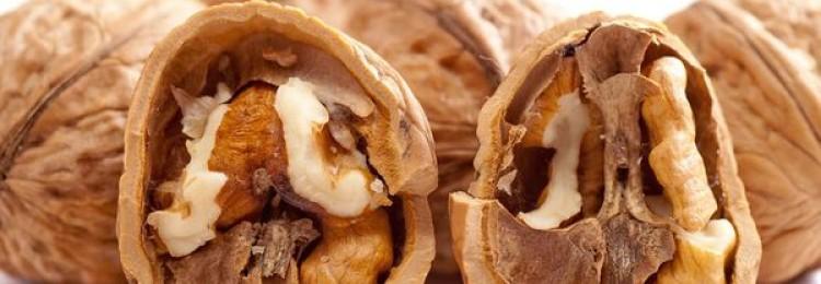 Полезные свойства перегородки грецкого ореха