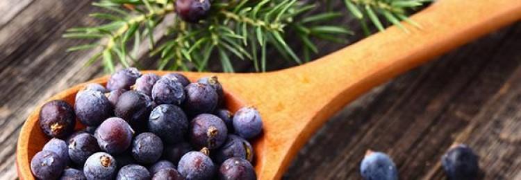 Лечебные свойства плодов можжевельника: польза и противопоказания продукта для организма человека