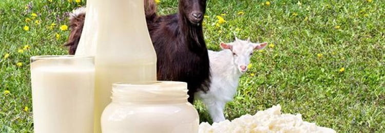 Козье молоко – целебный напиток? Состав, полезные свойства и противопоказания