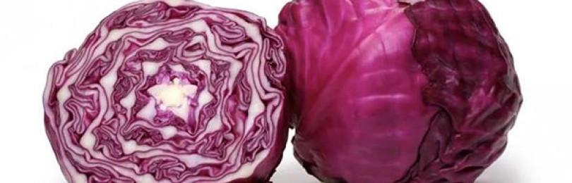 Полезна ли фиолетовая (краснокочанная) капуста для организма человека?