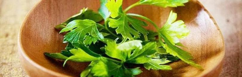 Королева в мире зелени – петрушка: в чем ее польза и вред для здоровья?