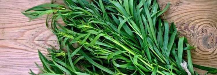 Трава тархун