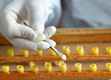Добыча пчелиного маточного молочка
