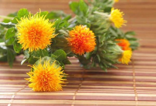 Цветки сафлора