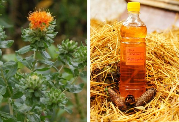 Цветок сафлора и бутылка с маслом