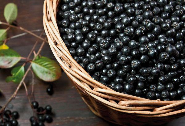 плоды черной рябины