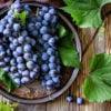 Виноград «Изабелла»