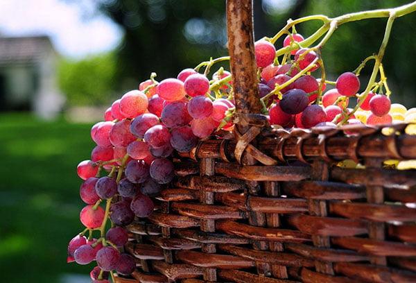 Розовый виноград в корзине
