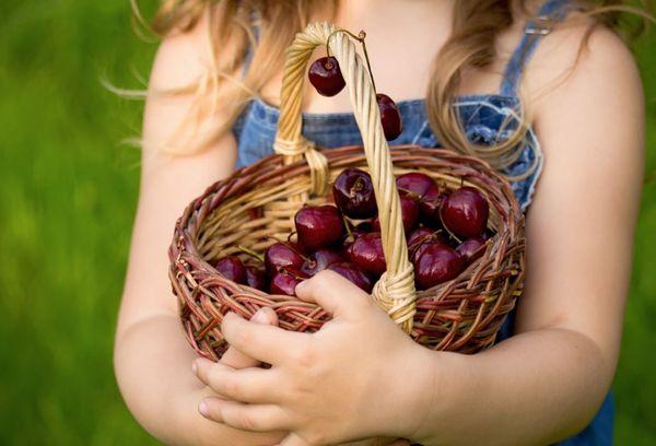 корзина с вишней в руках у девочки
