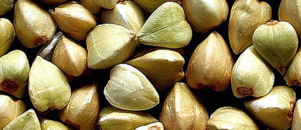 Зеленые зерна гречки