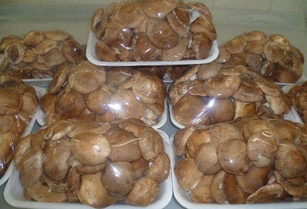 грибы шиитаке в упаковках