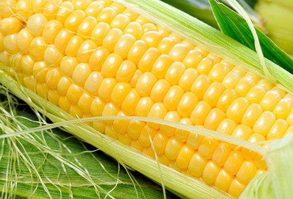 Молочная кукуруза