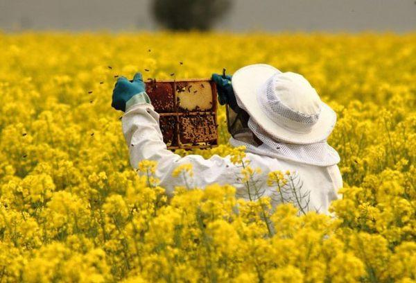 пчеловод в поле с цветами