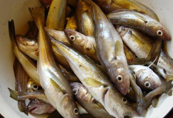 свежая морская рыба