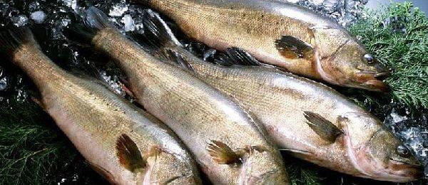 свежая рыба минтай