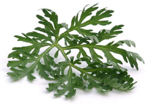 листок Полыни