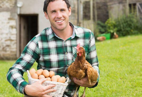 мужчина с куриными яйцами и курицей в руках