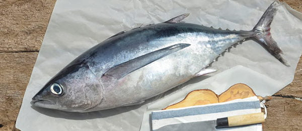 Свежий тунец