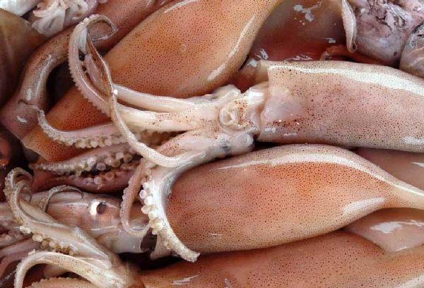 свежие кальмары