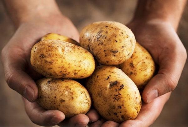 Сырой картофель в руках