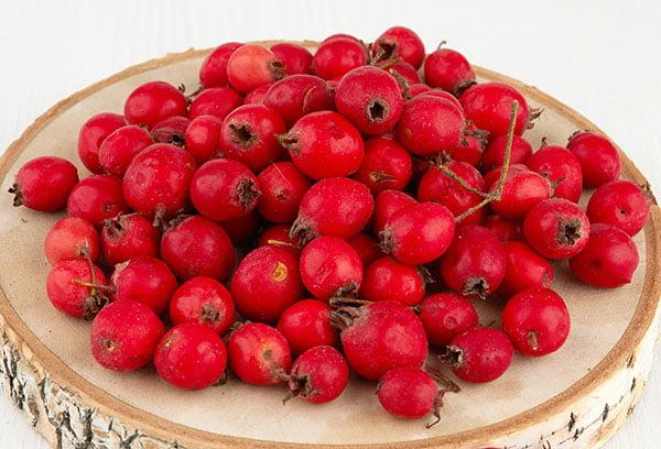 Свежие ягоды боярышника