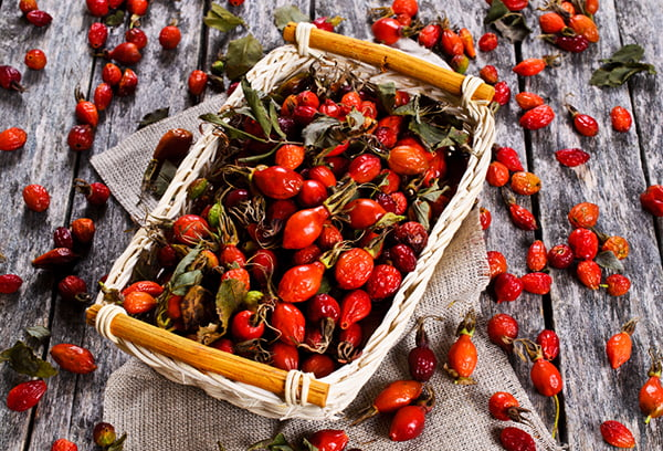 Свежие ягоды шиповника