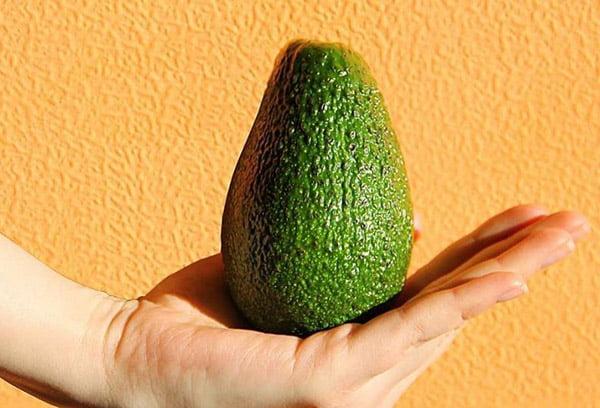 Крупный плод авокадо