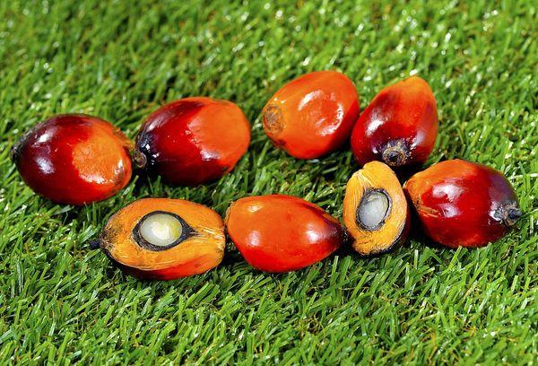 Разрезанные плоды пальмы