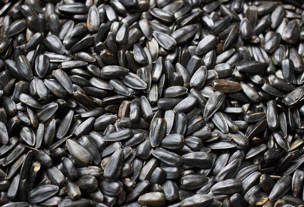 Зерна семечек