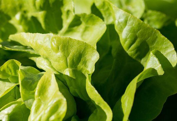 Салатные свежие листья