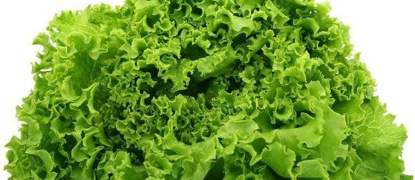 Свежий салатный лист
