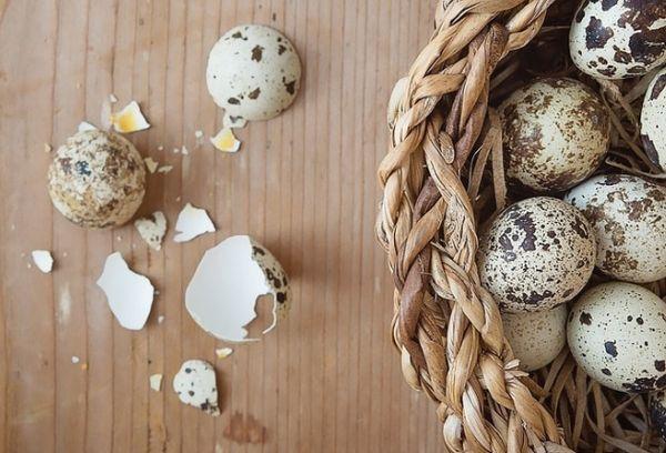 Скорлупа перепелиных яиц